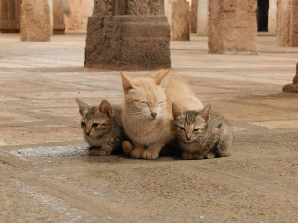 Cats in Temples
